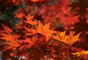 3.天龍寺境内の鮮やかな紅葉.jpg