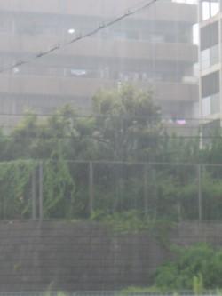 大雨 (2).JPG