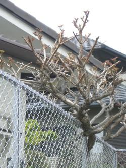 木に馴染んでいる鳥1.JPG