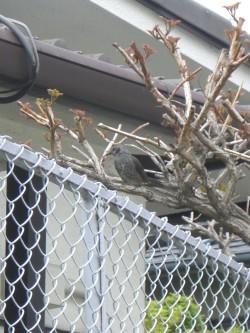 木に馴染んでいる鳥3 (2).JPG