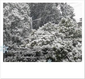 20110211-2.jpg